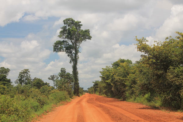 A remnant tree looms over the landscape in southwestern Tocantins state. Photo credit: Brendan Borrell