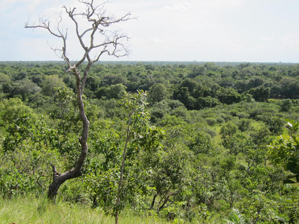A view of a transitional forest on the boundary of the Cerrado and the Amazonian biomes in the state of Tocantins. Photo credit: Brendan Borrell