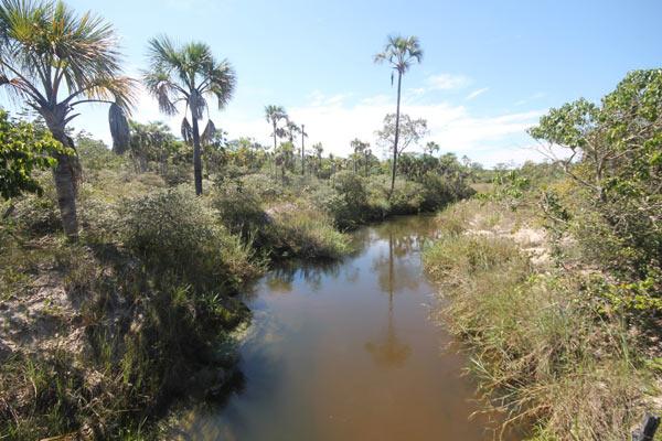 Buriti palms rise from a river's edge in the heart of Grande Sertão Veredas National Park. Photo credit: Brendan Borrell