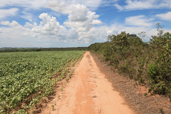 The sharp boundary between conservation and cropland on the edge of Grande Sertão Veredas National Park. Photo credit: Brendan Borrell