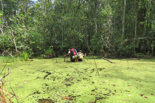 Two expedition members struggling to get through a mud pool in the swamp forest along the Sangha River. Photo by: Lieven Devreese.