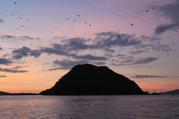Bats and Pulau Koaba. Photo by: Tiffany Roufs.