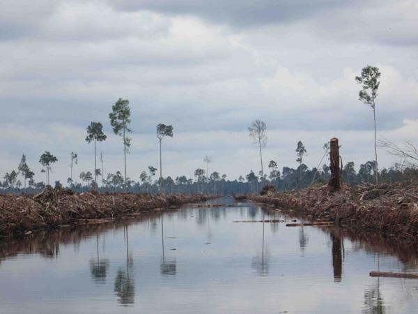 Pulau Padang, Riau, by RGE / APRIL