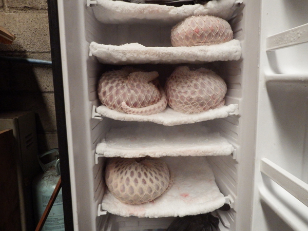 Poached pangolins in a freezer. Sunda pangolins are on the edge of extinction. Photo by: Paul Hilton for WCS.