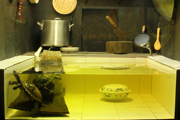 The new Annam leaf turtle exhibit at the London Zoo. Photo by: Ben Tapley/ZSL.