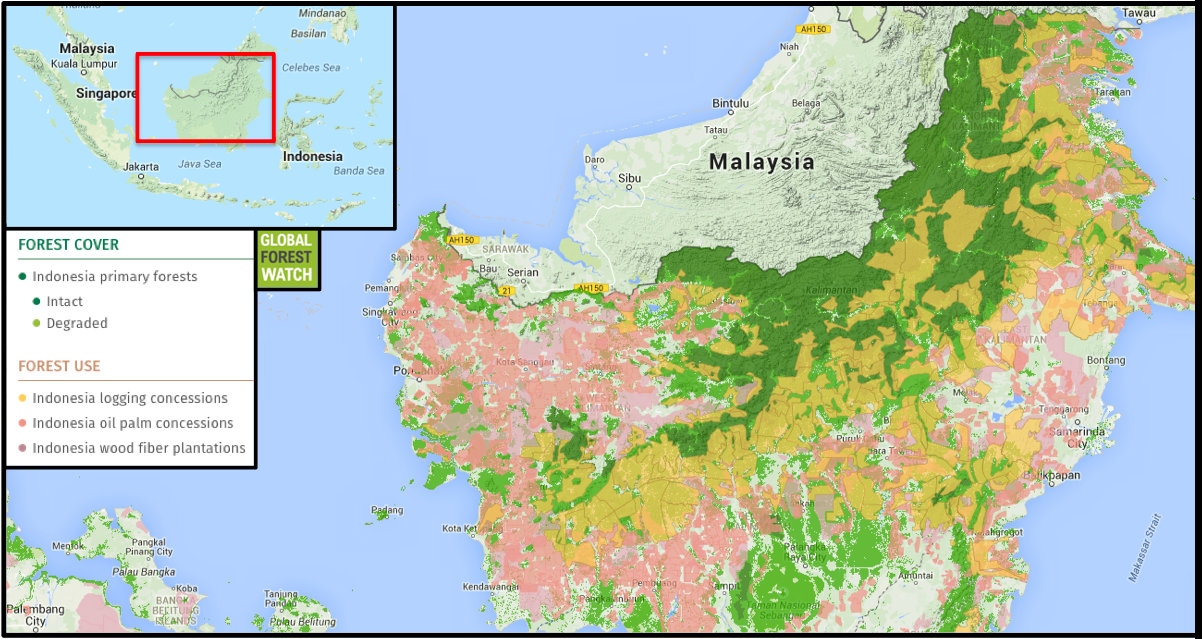 Indonesia Is Rife With Commodity Concessions With Much Of Its Primary Forests Degraded For Logging And Cultivation Of Oil Palm And Wood Fiber