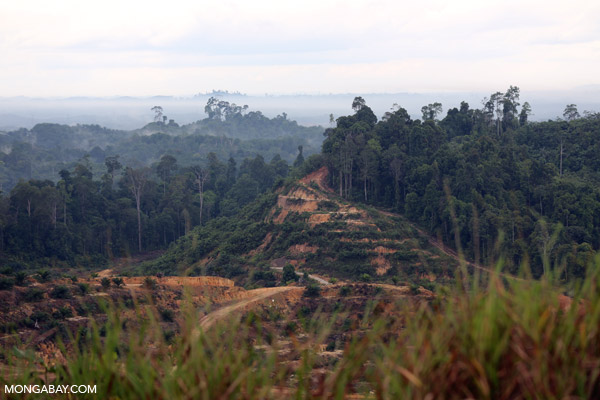 Forest cleared for an oil palm plantation in Sarawak, Malaysia
