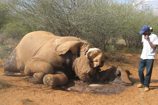 An elephant killed by poachers in Kenya. Photo by: Elaine Dawn.