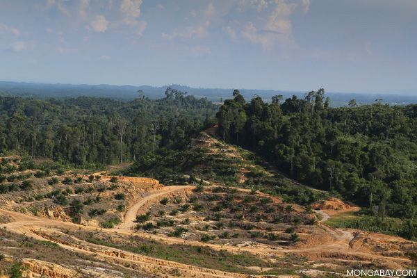Oil palm and rainforest in Sarawak, Malaysia.