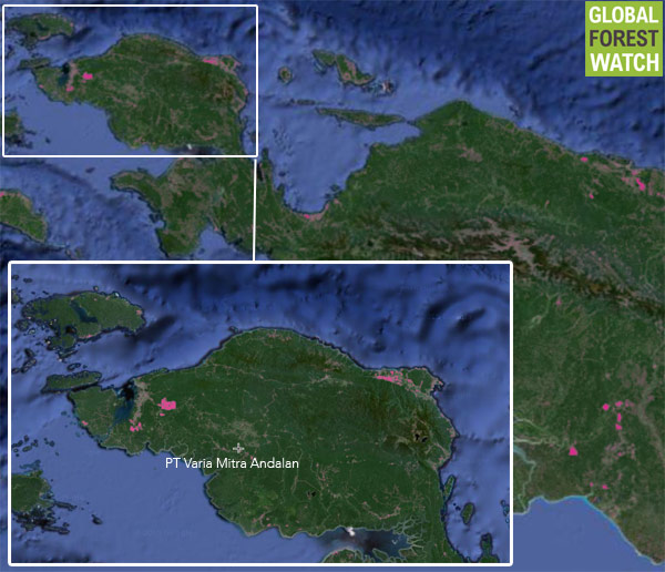 Global Forest Watch image showing the region in West Papua where the clearing took place