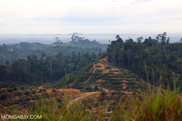 Forest cleared for an oil palm plantation in Miri, Sarawak