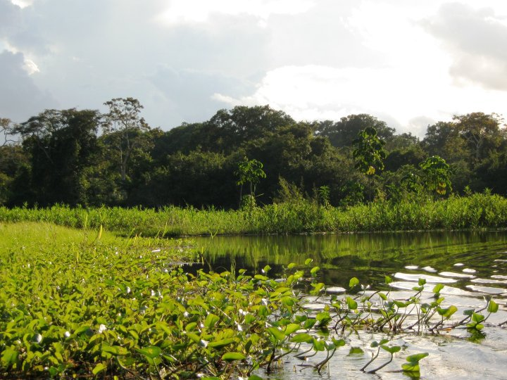 Forest near Iquitos, close to where the new reserve is. Photo by Morgan Erickson-Davis.
