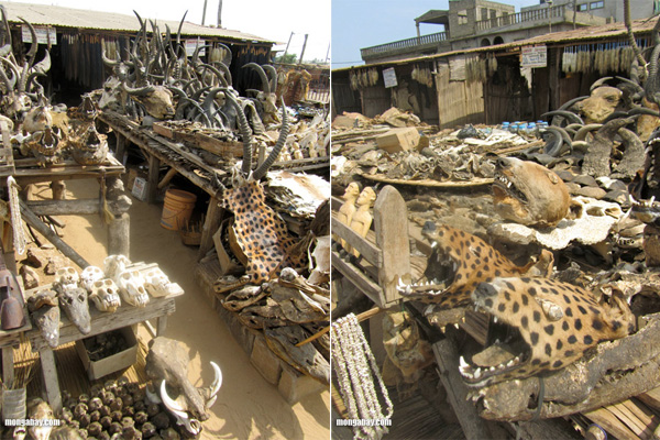 Wildlife market in Togo