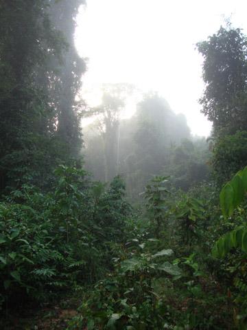 Road building spree hurts Amazon birds