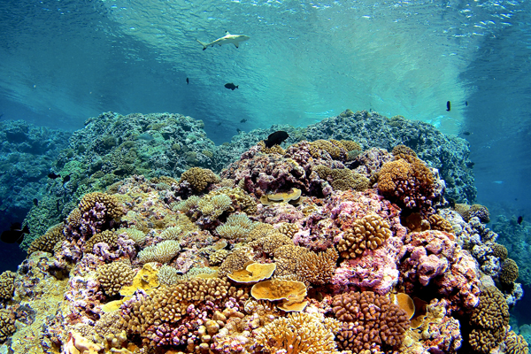 human impact on coral reefs Coral reefs: ecosystems of environmental and human value coral reefs boast some of the richest in biodiversity on the planet coral reefs cover an area of over 280,000 km 2 and support thousands of species in what many describe as the rainforests of the seas .