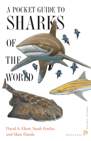 A Pocket Guide to Sharks of the World