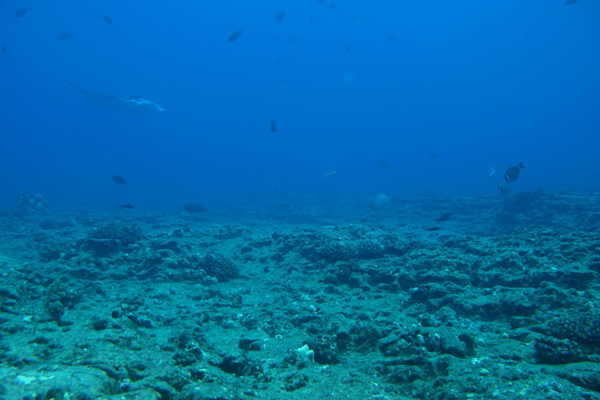 A heavily degraded Pacific coral reef where the cover of reef-building organisms is low and the cover of competitive fleshy algae is high. Only a few hardy coral species are able to survive chronic impacts by local people. Photo by: Jamison M. Gove, NOAA.