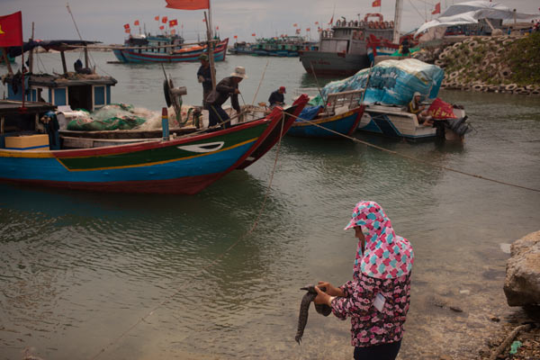 A woman cleans fish along the Ly Son coast.