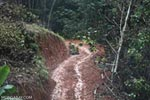 Logging road in China