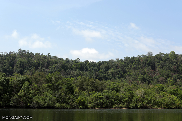 Forests along the Prek Piphot river