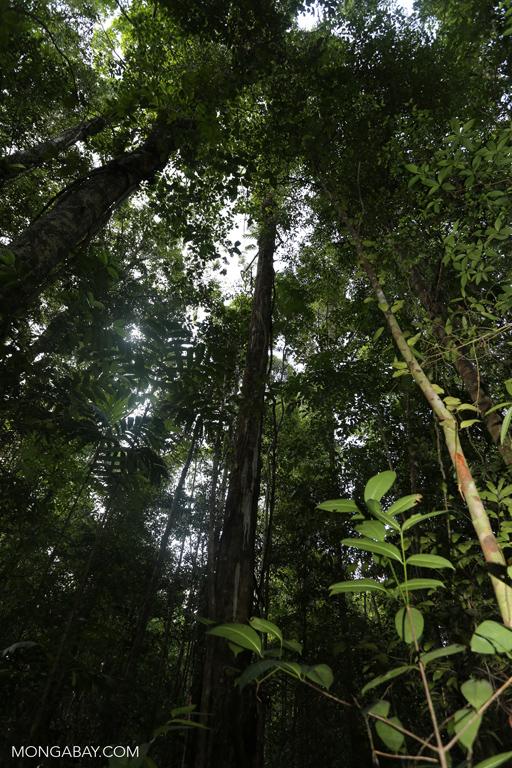 Cambodian rainforest