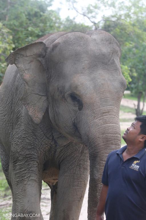 Elephant at Phnom Tamao Wildlife Rescue Centre