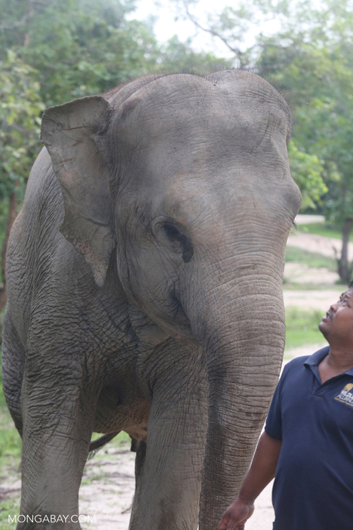 Elephant at Phnom Tamao Wildlife Rescue Centre