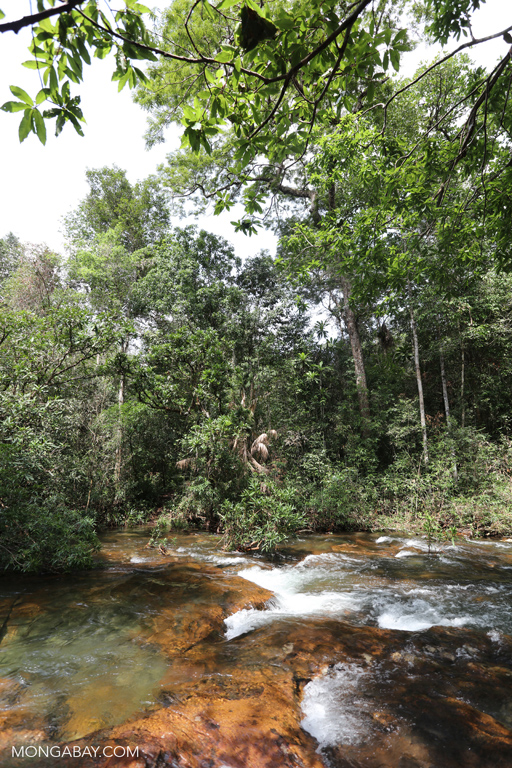 Rainforest creek in Cambodia