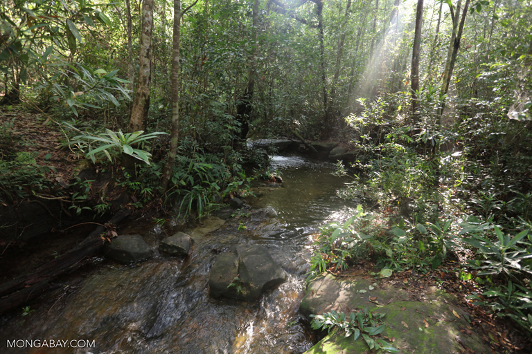 Rainforest creek in Cambodia