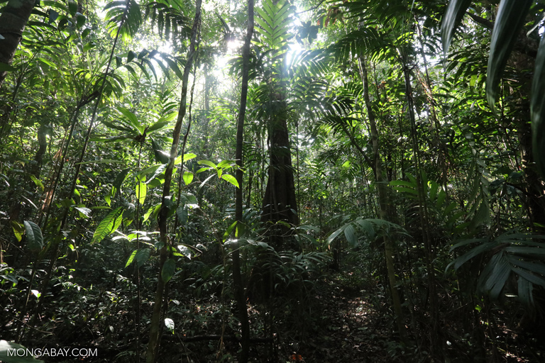 Rainforest understory in Cambodia
