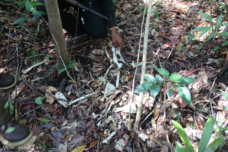 Snare set for catching wildlife