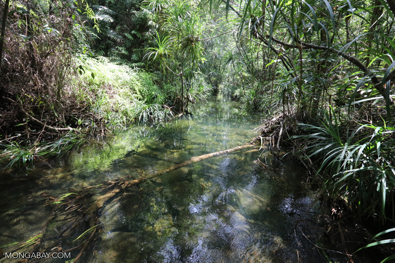 Clearwater creek in the Cambodian rainforest
