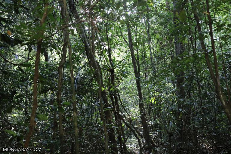 Rainforest path in Cambodia