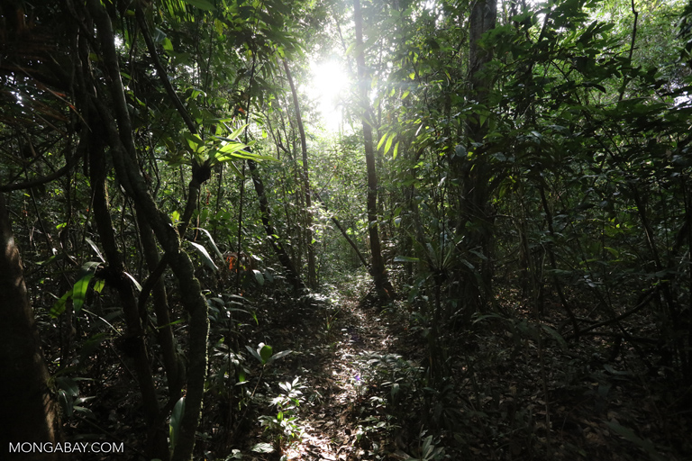 Rainforest trail in Cambodia