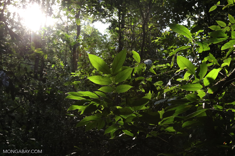 Rainforest understory