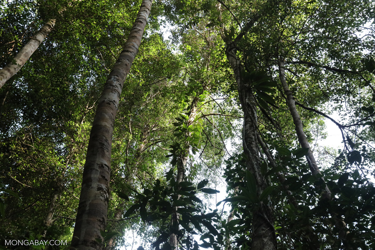 View of the rainforest canopy from below