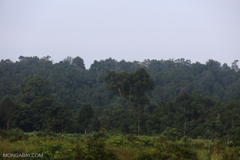 Rainforest in the Southern Cardamom Mountains