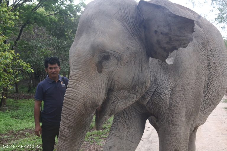 Asian elephant at Phnom Tamao Wildlife Rescue Centre