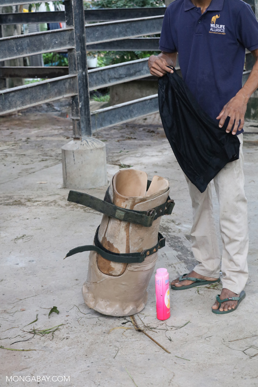 Prosthetic foot for an elephant