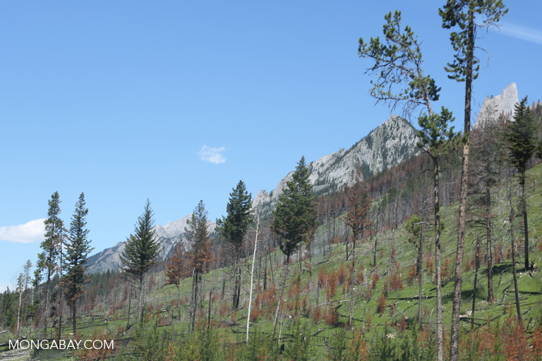 Recovering burned forest