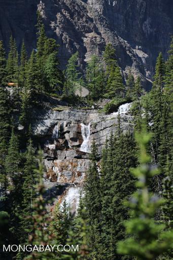 Waterfall near Lake Agnes