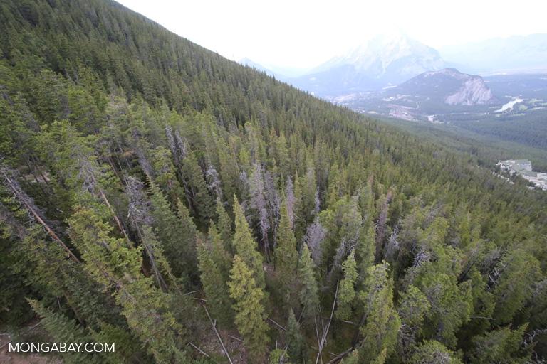 Forest near Banff