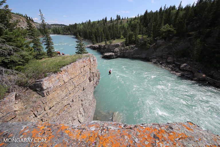 Cliff-jumping into the Bow River
