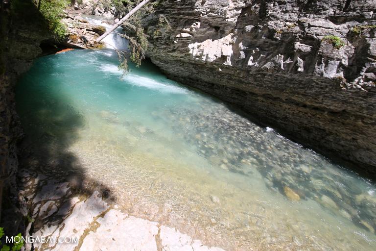 Johnston Creek
