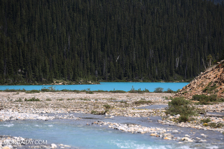 River flowing into Bow Lake