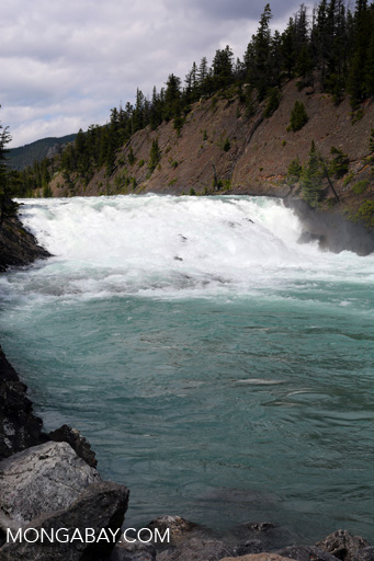 Rapids on the Bow River