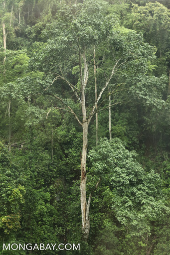 Yunnan rainforest