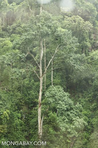 Yunnan rainforest