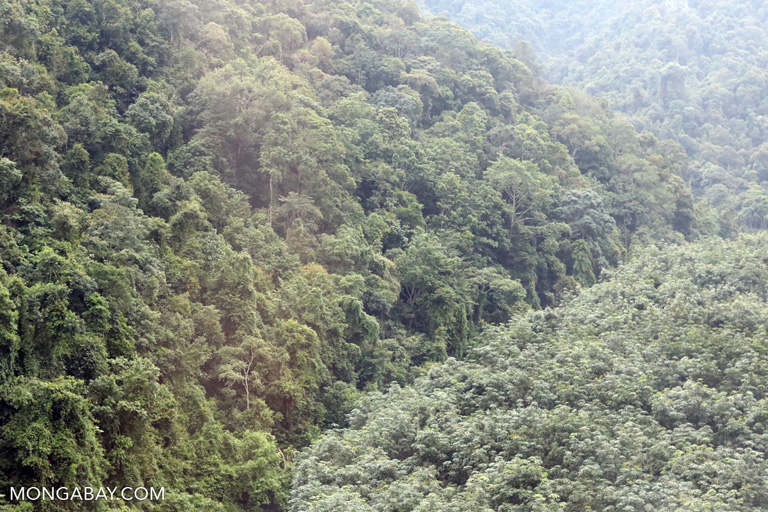 Natural forest and rubber plantation