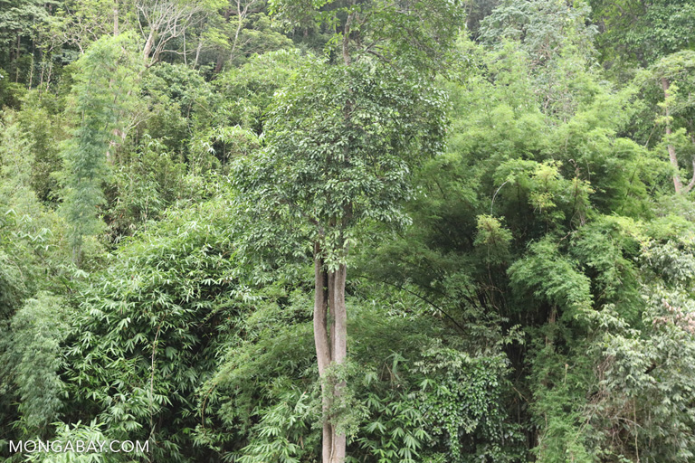 Tropical forest in Yunnan